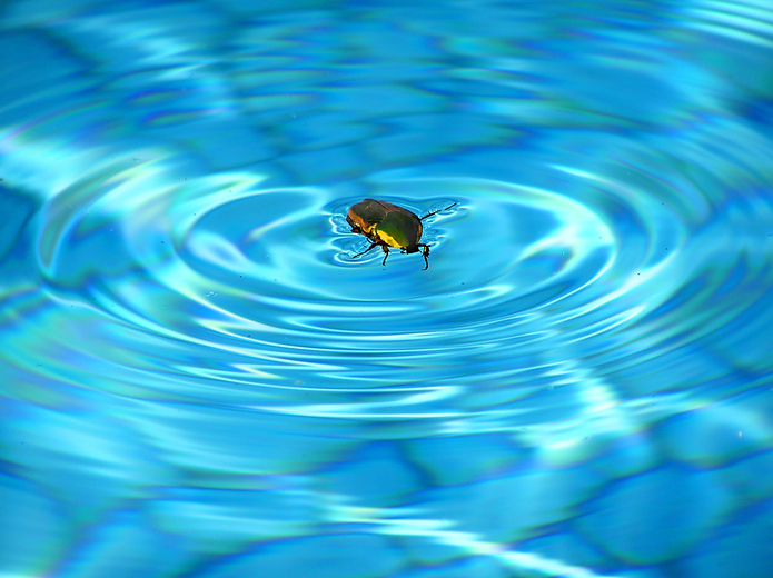 How to Get Rid of Bugs Around Your Swimming Pool - Crystal Pools